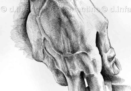 Studio di una mano del David di Michelangelo