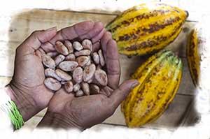 Cabossa di Cacao